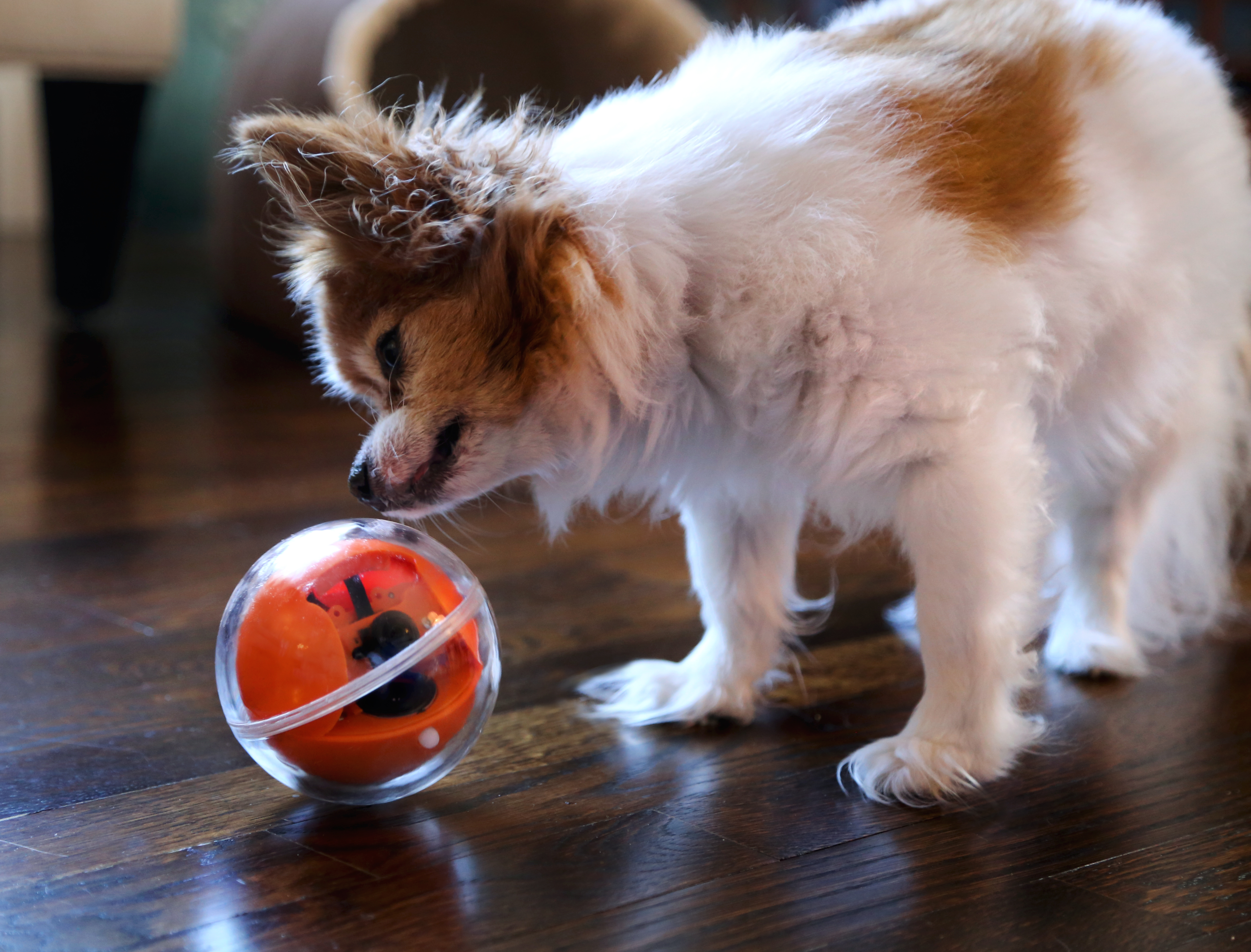 PlayDate: Play with your pet dog or cat  Anytime  Anywhere